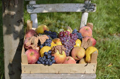 Fruit stored. Various types of fruit stored in wooden crate on chair outdoors Royalty Free Stock Photos
