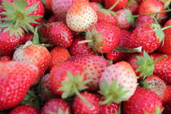 Fruit strawberry. Fresh red strawberry close up Stock Photography