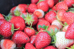 Fruit strawberry. Fresh red strawberry close up Royalty Free Stock Image