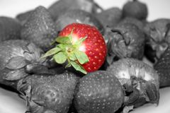 Fruit - Strawberry Isolated. Isolated strawberry in the middle of many strawberries royalty free stock image