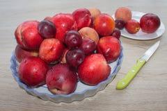 Fruit sur la table Pêches, nectarine, prunes Belles pêches, nectarine et prunes douces Images libres de droits