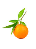 Fruit tangerine. Fresh tangerine fruit with a lot of leaves on a white background stock photos