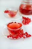 Fruit tea. Red currant tea in thwo cups Stock Photos