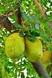 Fruit Thaïlande Images libres de droits