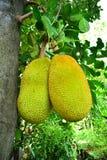 Fruit Thaïlande Photos stock