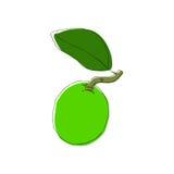 Fruit tiré par la main de chaux de vecteur dans le style de vintahe Éléments d'isolement de conception illustration de vecteur