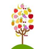 Fruit tree Royalty Free Stock Photos