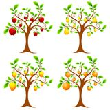 Fruit Tree Royalty Free Stock Photo