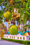 Fruit on a tree branch and architectural elements of  Wat Kaeo Manee Si Mahatha Royalty Free Stock Images
