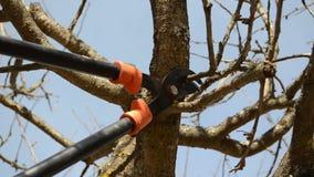 Fruit tree cut trim prune two handle clipper spring garden. Fruit tree cut trim prune with two handle clipper scissors in spring garden on background of blue sky stock footage