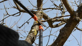 Fruit tree cut trim two handle clippers spring garden. Fruit tree cut trim prune with two handle clippers scissors in spring garden on background of blue sky stock video