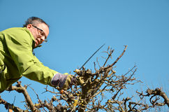 Fruit tree cutting Royalty Free Stock Photography