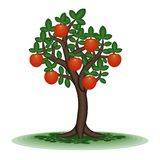 Fruit tree Stock Photography