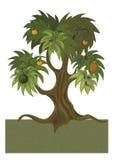Fruit tree Stock Photos