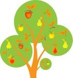 Fruit Tree, Orchard Tree, Tree Vector. Fruit tree, orchard tree, green tree, apple tree, pears tree, fall tree, autumn tree, apples , red apples, green pears Royalty Free Stock Photos