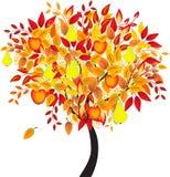 Fruit Tree, Orchard Tree, Tree Vector. Fruit tree, orchard tree, green tree, apple tree, pears tree, fall tree, autumn tree, apples , red apples, green pears Stock Photos
