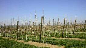 Fruit tree plantation stock footage