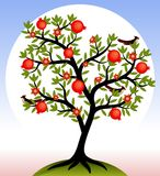 Fruit tree. Stock Images