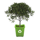 Fruit tree in recycle bin. Recycling concept with fruit tree growing in green recycle bin Stock Photo