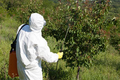 Fruit tree spraying Royalty Free Stock Image