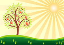 Fruit tree and the sun. Tree with fruits, apples on a green meadow and the sun with beams. Vector drawing Stock Photography