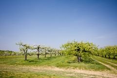 Fruit trees Stock Photography