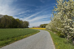 Fruit Trees at a Country Road Stock Photos