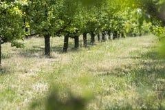 Fruit trees royalty free stock photo