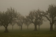 Fruit trees in the morning fog Royalty Free Stock Photos