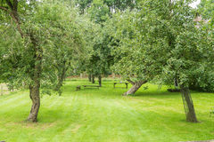 Fruit trees in an orchard with grass and wooden benches. In the summer royalty free stock photography