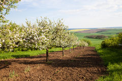 Fruit trees Royalty Free Stock Photography