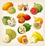 Fruit tropical exotique Photos stock