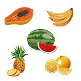 Fruit tropical fresh harvest. Vector illustration eps 10 Stock Images