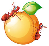A fruit with two ants. Illustration of a fruit with two ants on a white background vector illustration