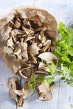 Fruit of the underbrush, dried mushrooms. Stock Photos