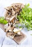 Fruit of the underbrush, dried mushrooms. Stock Image