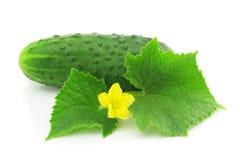 Fruit végétal de concombre vert avec des lames d'isolement Photo libre de droits