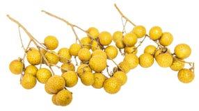 Fruit V de plot réflectorisé Images stock