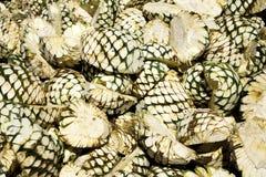 Fruit van de agave stapelde zich omhoog op en Wachtend op Oven Stock Foto