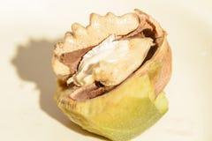 Fruit van de okkernoot Stock Afbeelding