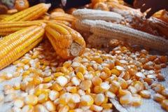 Fruit van graan na schil Stock Fotografie
