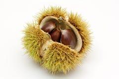 Fruit van kastanjeboom Royalty-vrije Stock Afbeelding