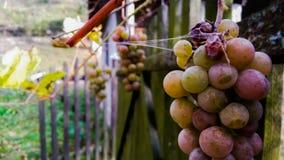 Fruit van oktober van de aardherfst het mooie stock fotografie