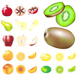 Fruit variety in vector illustration. Whole fruit, slices and wedges, in vector illustration.  Includes common types, as well as kiwi and pomegranate Stock Photography