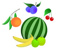 Fruit vector set. Cartoon style royalty free illustration
