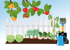Fruit and vegetable garden Stock Images