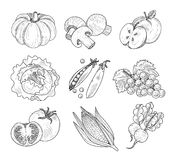 Fruit and Vegetables, Handdrawn Vector Stock Photography
