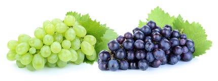 Fruit vert-bleu de fruits de raisins d'isolement sur le blanc images stock