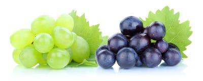 Fruit vert-bleu de fruits frais de raisins images libres de droits