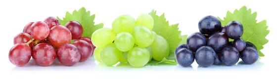 Fruit vert-bleu rouge de fruits frais de raisins image libre de droits